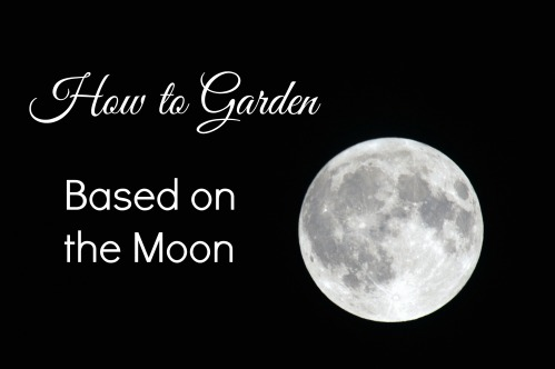 How to Garden based on the Moon